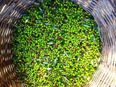 Olivenöl aus Kreta Griechenland