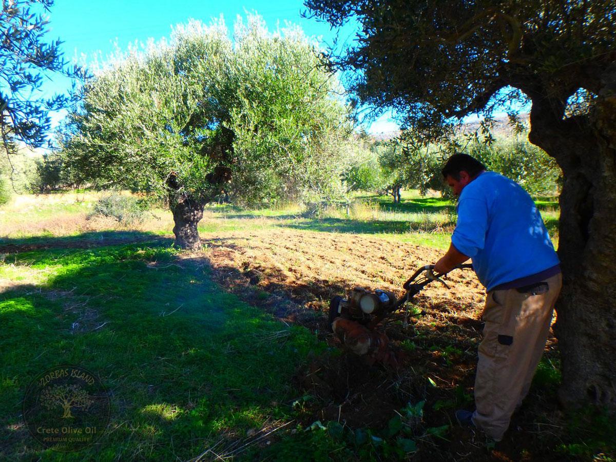 Premium Olivenöl aus Kreta