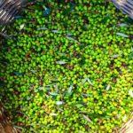 kreta oliven