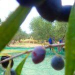 premium kreta Olivenöl