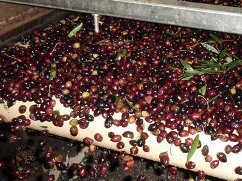 reinigen der Oliven