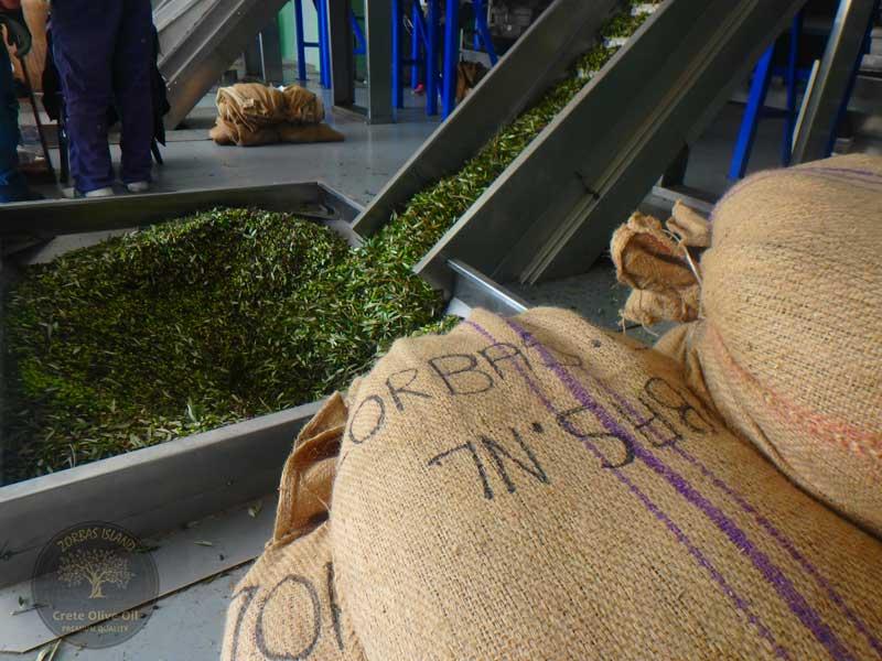 sart-oliven pressung
